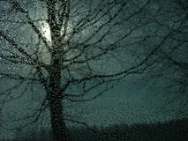 Sinister looking tree. Behind the glass surface royalty free stock photos