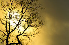 Sinister tree. A silhouette of a tree against a backdrop of the sun in the clouds Stock Photos