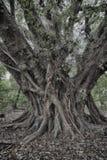 Sinistere boom Stock Afbeeldingen