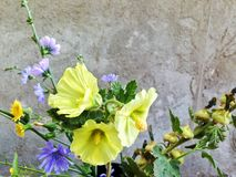 sinistra il paese e decisivo di prendere le immagini dei fiori medicinali della bella montagna immagine stock