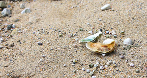 Sink the sea, oysters, clams. Sea shell oysters on the rocky shore of the sea stock images