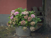 Sink water bowl with blooming hydrangeas Royalty Free Stock Images