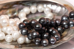 Sink and the white and black pearls. In a beautiful mother of pearl shell Royalty Free Stock Image