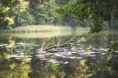 Sinkender Baum in einem See Stockfotografie