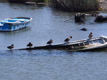 Sinkendes Boot Stockbilder