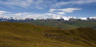 Sinkiang grassland with snow mountains Royalty Free Stock Photos