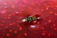 Sinking bee. In raspberry jam Royalty Free Stock Photo