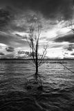 Sinking boat and tree. A sinking, full of water boat near a tree in a lake, under a big sky with beautiful cloudscape royalty free stock photo