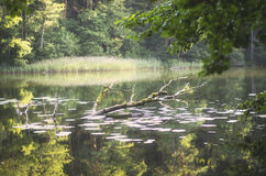Sinking tree in a lake stock photography