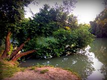 Sinking tree in the river royalty free stock photography