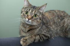 Sinnesrörelser av en katt Royaltyfria Foton
