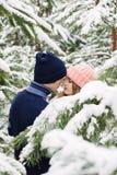 Sinnliche hübsche Paare im Winterwald unter Tannenbäumen Lizenzfreies Stockfoto
