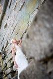 Sinnliches Porträt der schönen Braut stockfotografie