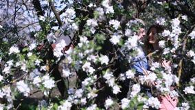 Sinnliga par grundar avskildhet, i att blomstra den körsbärsröda fruktträdgården under träd mycket av små vita blommor stiligt ma arkivfilmer