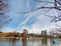 Sinobazu pond in Ueno park, Japan royalty free stock photography