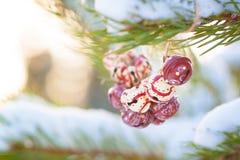 Sinos coloridos do vintage do Natal nos ramos de uma árvore nevado Fotos de Stock