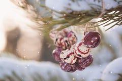 Sinos coloridos do vintage do Natal nos ramos de uma árvore nevado Foto de Stock
