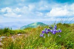 Sinos de Carpathians Imagens de Stock Royalty Free