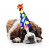 Sint-bernard die een Hoed van de Verjaardag van de Stip draagt Stock Afbeeldingen