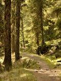 Sinta os elementos da floresta fotografia de stock royalty free