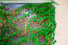 Sintesi della finestra della Camera Fotografie Stock
