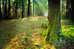 Sintra Wald Stockfotos