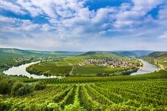 Sinuosidade famosa de Moselle com vinhedos Fotos de Stock Royalty Free