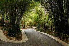 Sinuous asphalt road in shady bamboo on sunny spring day Stock Image