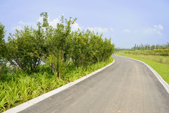 Sinuous asphalt road in summer green on sunny day Stock Photography
