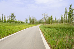 Sinuous asphalt road in summer plants on sunny day Royalty Free Stock Photography