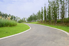Sinuous asphalt road in verdant summer plants on sunny day Stock Photo
