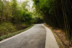 Sinuous asphalted road in shady bamboo on sunny spring day Stock Photos
