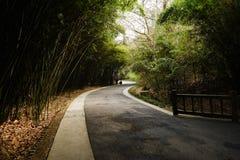 Sinuous blacktop w ciemniutkim bambusie na pogodnym wiosna dniu zdjęcia royalty free