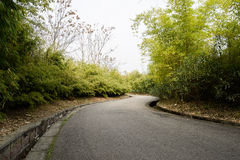 Sinuous blacktopped road in bamboo of spring Royalty Free Stock Image