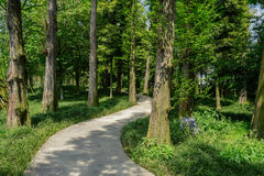 Sinuous concrete path in shaded woods at sunny spring noon Royalty Free Stock Images