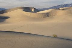 Sinuous Curves on Sand Dunes Royalty Free Stock Photo