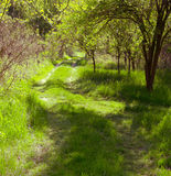 Sinuous forest road in the hungarian rural Stock Photography
