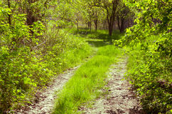 Sinuous forest road in the hungarian rural Royalty Free Stock Image