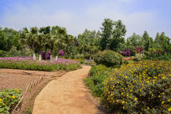 Sinuous path in flowers at sunny summer noon Royalty Free Stock Image