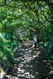 Sinuous shaded path under green foliage and tortuous branches Royalty Free Stock Images