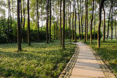 Sinuous shady path through woods in warm afternoon sunlight Stock Photography