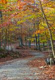Sinuous Trail in Fall at Omega Park. Sinuous walking trail in fall at Omega Park. Nice folliage stock images