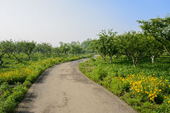 Sinuous way in flowering orchard of sunny summer morning Stock Photography