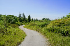 Sinuous weedy countryside way in sunny summer Stock Image