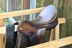 Siodłowy koń Zdjęcie Royalty Free