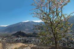 sion瑞士 明亮的美好的春天 免版税库存图片