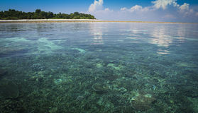 Sipadan island coral reef sabah borneo. The coral reef below the water and white sand beach of sipadan island in sabah malaysian borneo Stock Photo