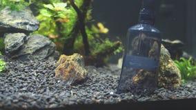 Siphon gravel cleaner. Tool in the aquarium stock video