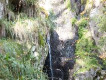 Sippra i skogen på en stenvägg Fotografering för Bildbyråer