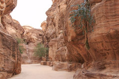 The Siq leading up to the Trausury in Petra, Jordan Stock Photography